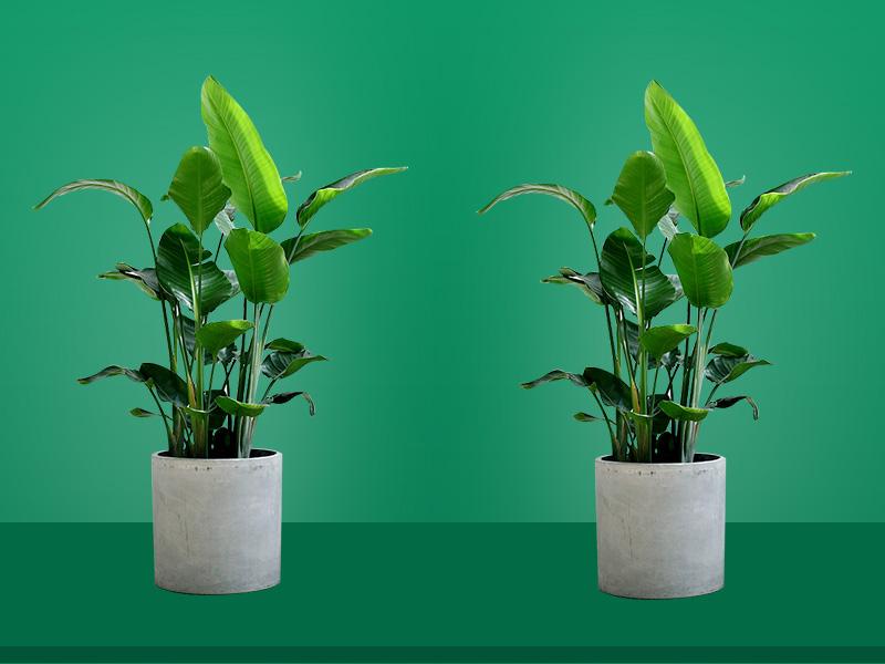 家居如何更好的摆放绿植,加微信咨询家居风水。