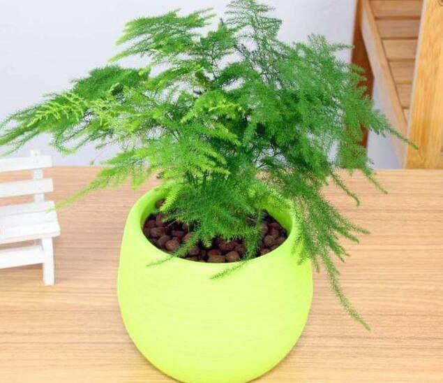 装修风水学:家居植物摆放禁忌
