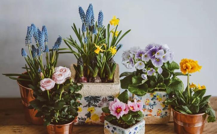 室内植物摆放设计,营造自然品位的家