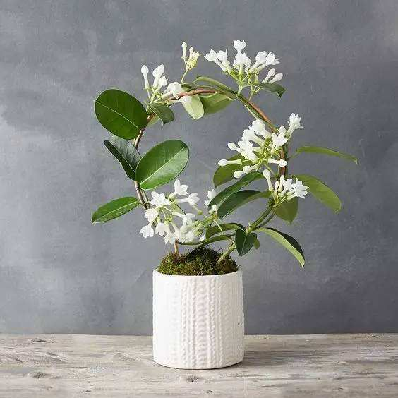 住在宜昌,装修完的房子放什么植物好呢