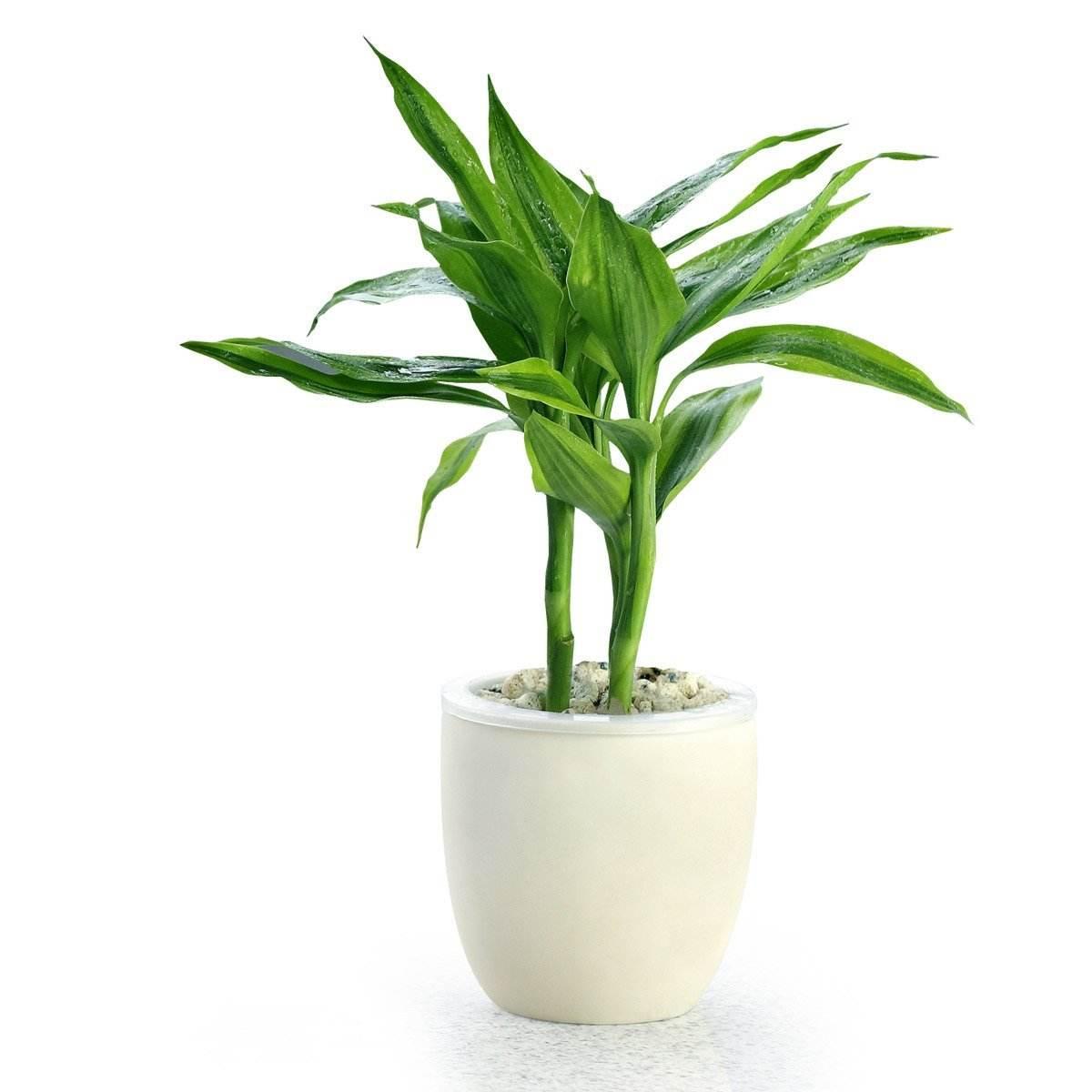 房子装修完后用什么风水植物进行装饰?,需要注意什么?
