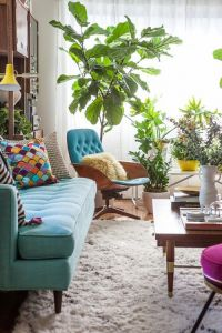 选择正确的室内绿植——让大自然融入你的家居生活