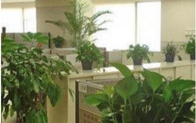 寶安辦公室裝修要注意哪些辦公風水呢?