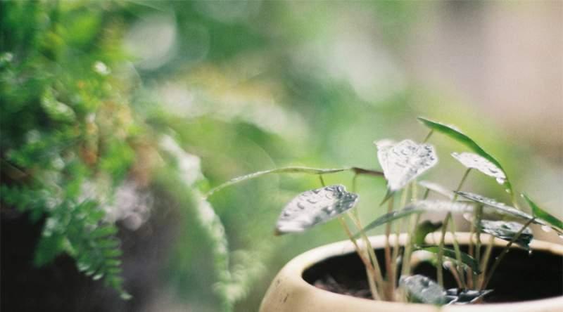 揭秘您不知道的家居植物风水秘密