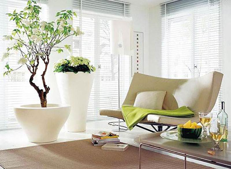 家居绿植摆放风水禁忌,教你8招打造舒适放心家!