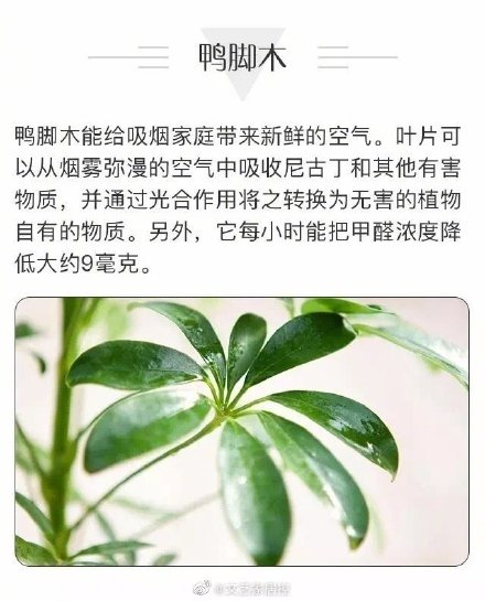 8種可以吸甲醛的植物,空氣凈化小能手!